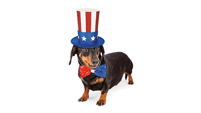 Tips to keep your pets safe this Independence Day