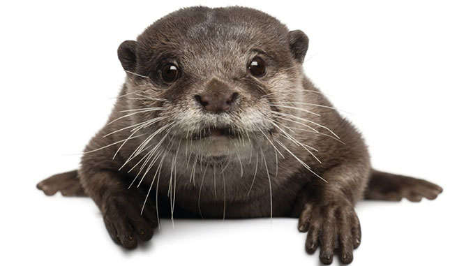 An 'Otterly' Fascinating Encounter